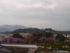 vue-sakura-himeji-chateau-jardin