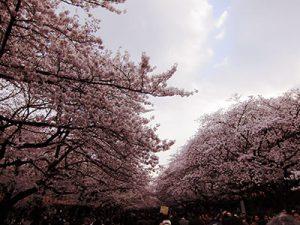 ueno-parc