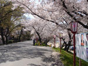okazaki-premier-sakura
