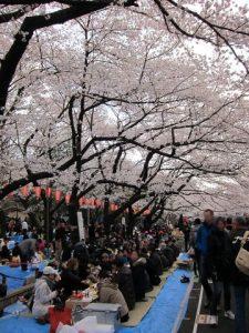 Hanami à Ueno