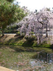 sakura-etand