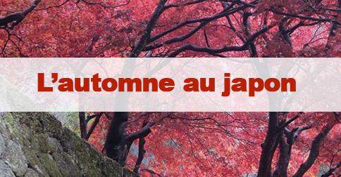 Article Automne au japon : admirer les feuilles rouges
