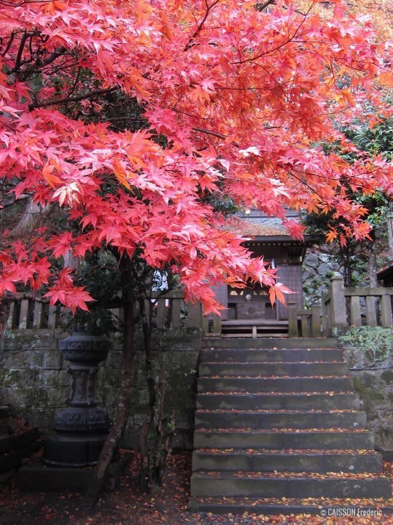 feuilles rouges japon
