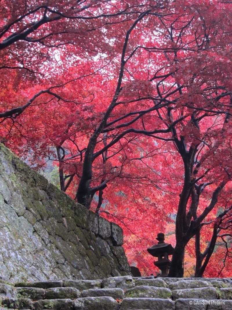 feuilles-rouge-momiji