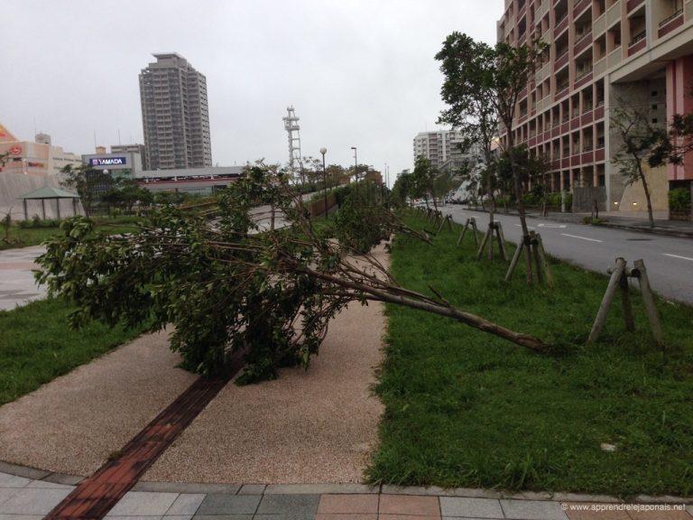 typhon-okinawa