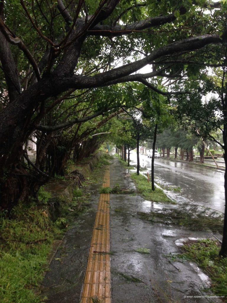 degats-typhon