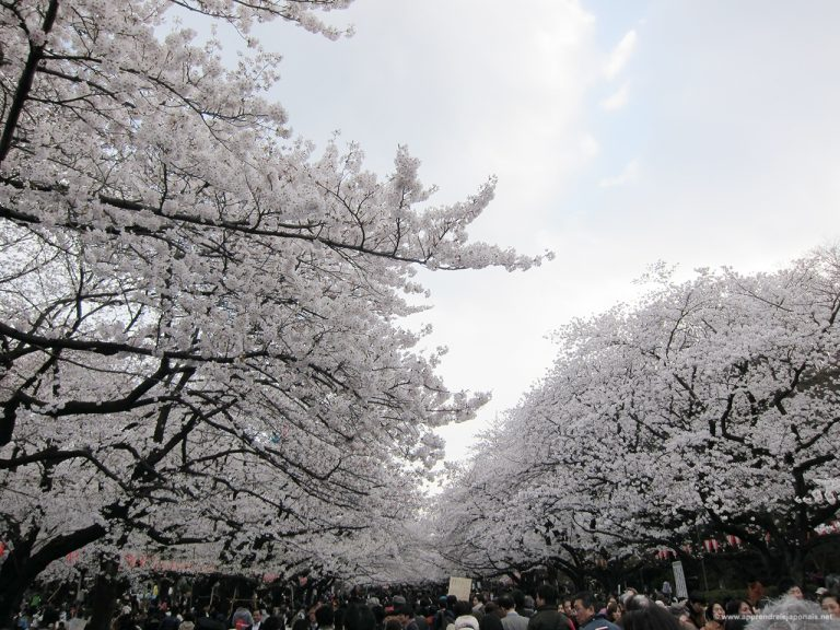 Ueno parc