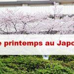 Article Le printemps au Japon : La meilleure saison pour partir ? Que peut on faire ?