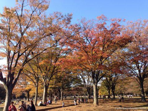 Parc yoyogi en automne
